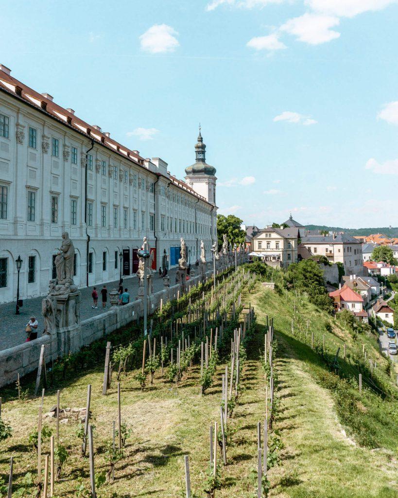 Beautiful vineyard at St Barbara's Cathedral in Kutna Hora.