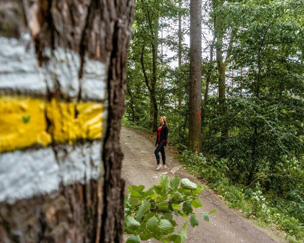 Yellow trail markings on the way to Vyhlidka Maj.